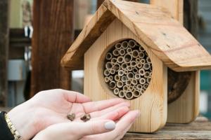 mason bee cocoon pollinator gardening save the bees Minter