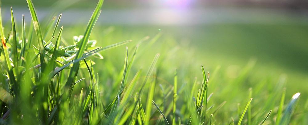 April Lawn Care