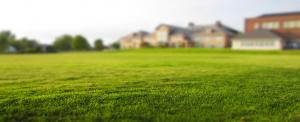 moss fertilizer weeds grass cutting mow lawn green