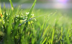lawn care maintenance yard green sunshine
