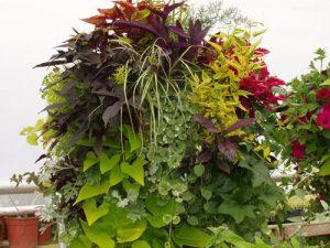 Container Gardening Minter Gardens