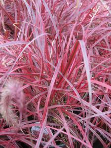 heat drought tolerant plants sunlight sun hot weather plants grow grass