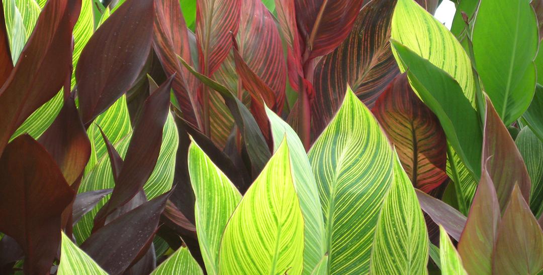 Some Like It Hot: Heat-Tolerant Plants