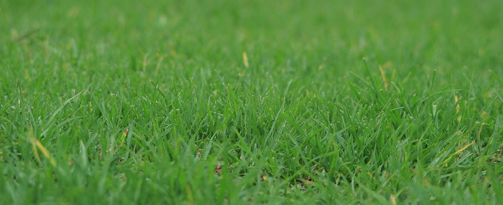 Reviving Your Lawn