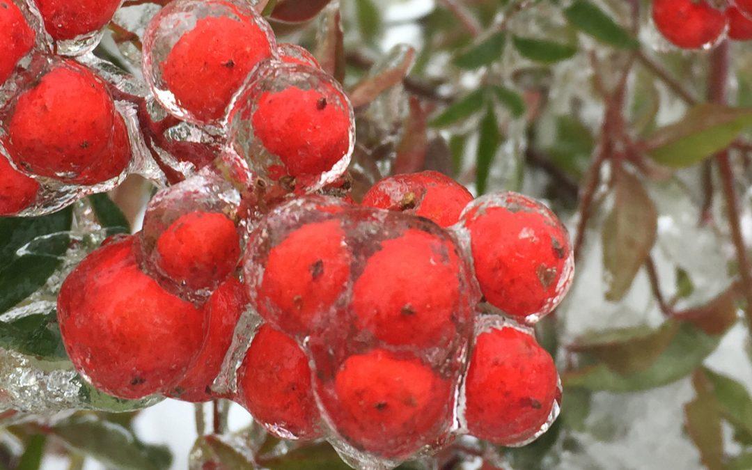 Winterizing Your Garden