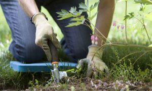 Adding Compost to Your Garden