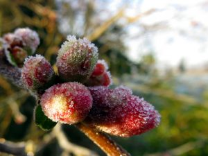 winter flowering trees and shrubs, cherries, Chinese witch hazel, ornamental grasses, jasmine
