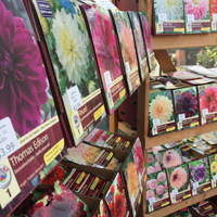 Growing Guides - Bulbs