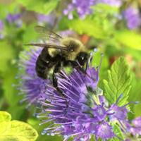 Growing Guides - Bee Gardens
