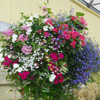 Growing Guides - Hanging Baskets