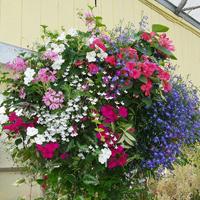 Growing Guides - Hanging Baskets