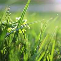 Growing Guides - Lawns