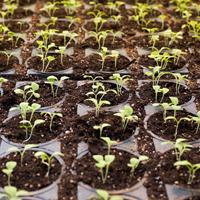 Growing Guides - Starting Seeds