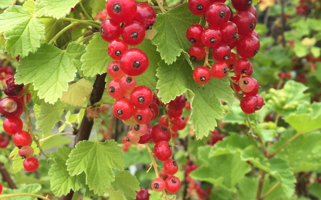 Pruning Seminars: Pruning 102