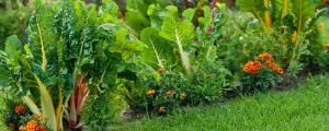 photo of a summer veggie garden - garden center - chilliwack