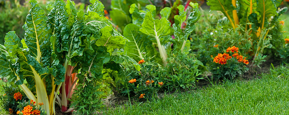 Summer Veggie Garden Struggles (& How to Deal with Them)