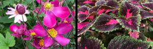 Extend your summer garden Chilliwack BC