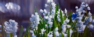 Minor Bulbs Major Impact Minter Country Garden Chilliwack, BC
