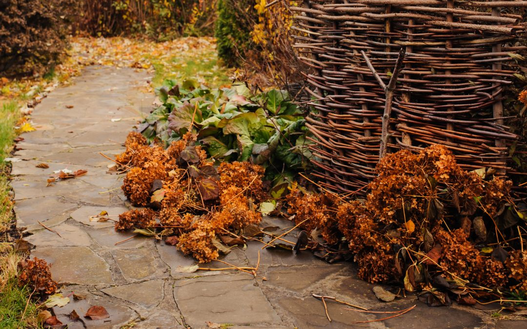 Your October Gardening To-Do List