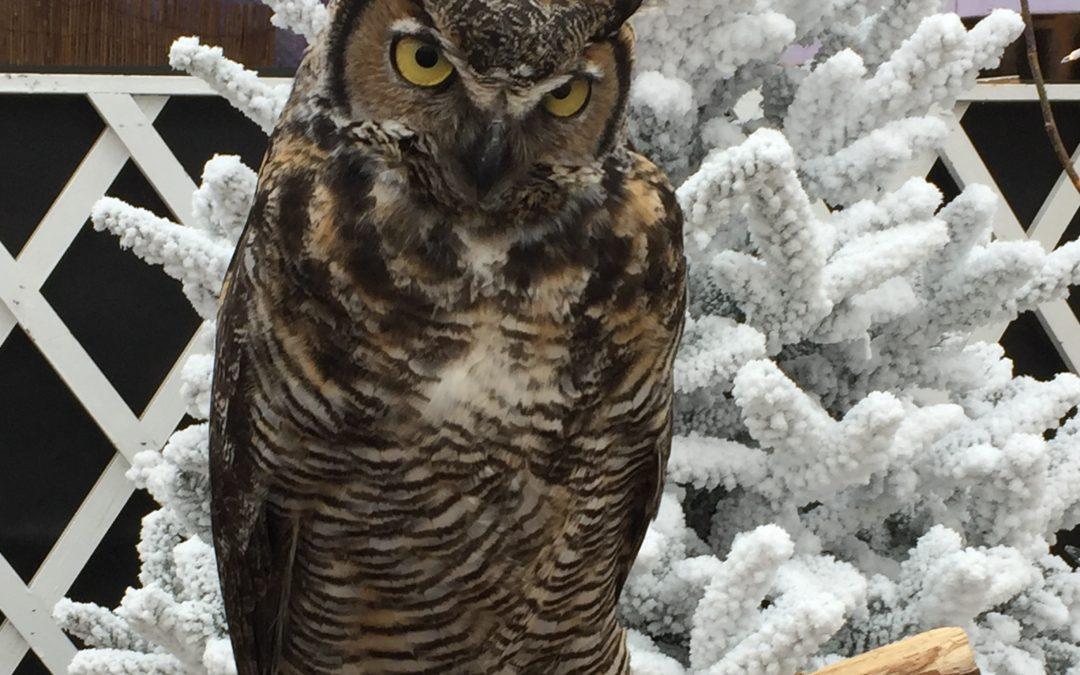 Owl Classes with Raptors Ridge