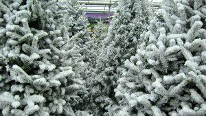 winter-green-timing-flocked-tree