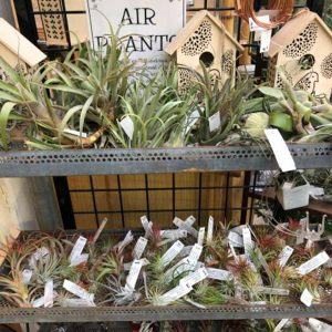 gifts-for-gardeners-2019-air-plants