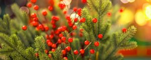 gifts-for-gardeners-2019-header-tree-berries-bokeh