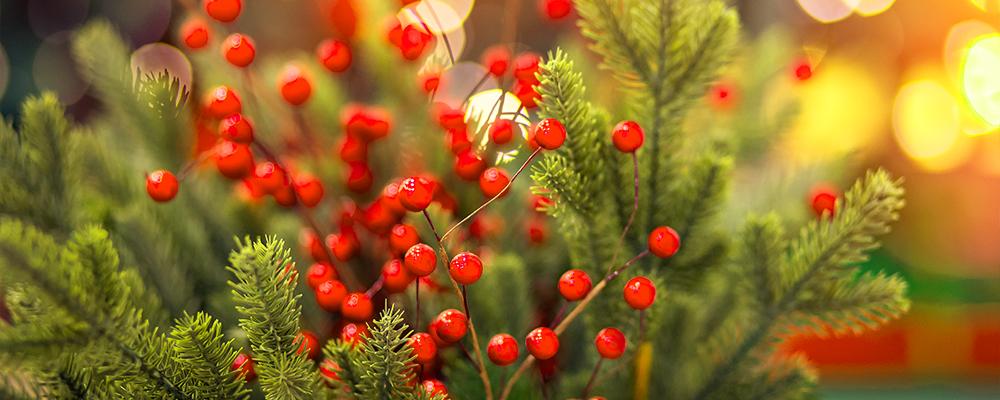 gifts-for-gardeners-2019-header-tree-berries-bokeh