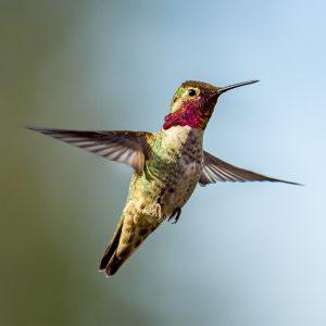 kids-and-the-winter-garden-hummingbird