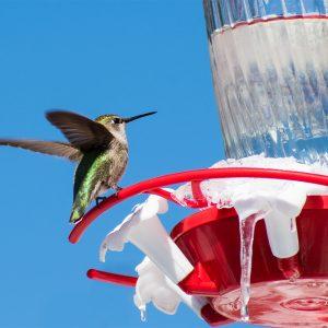 kids-and-the-winter-garden-hummingbird-feeder-winter