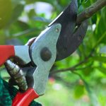 red-pruning-shears-feature