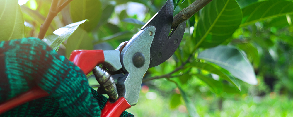 Pruning: Selecting The Right Tools for the Job