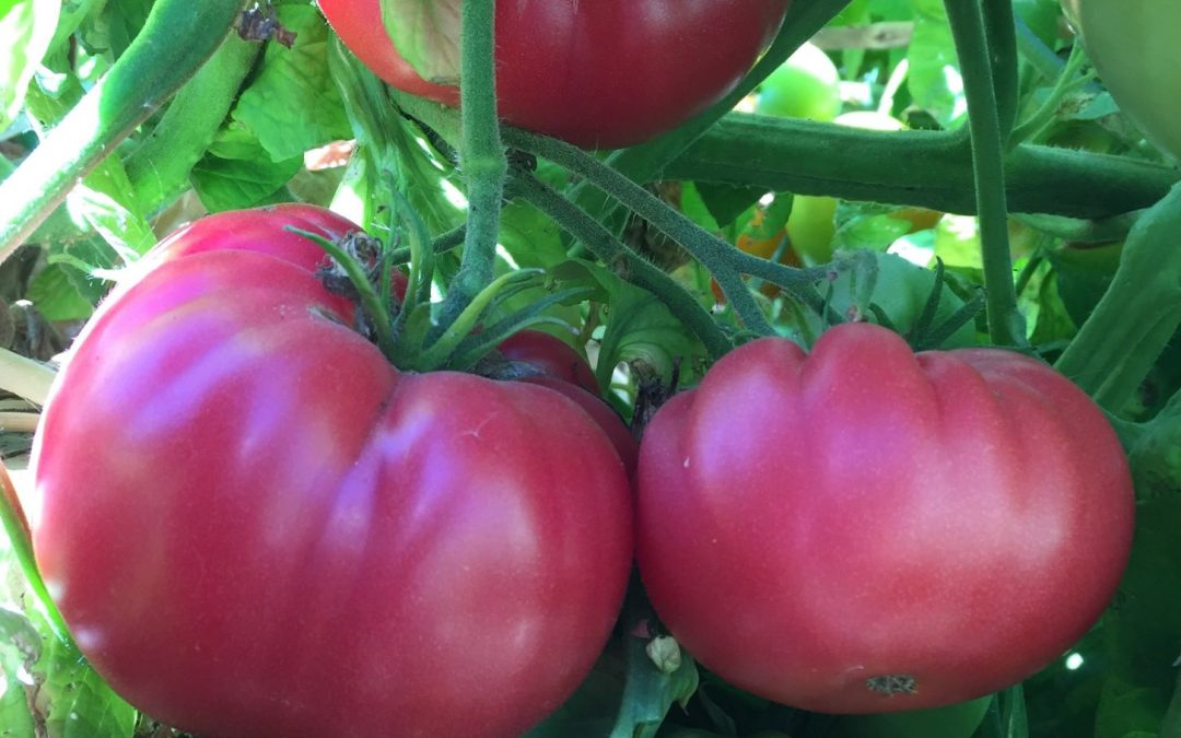 Maximizing Veggie Garden Spaces – FULL