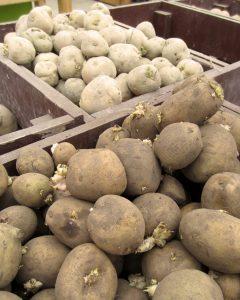 potatoes-different-potatoes-in-bins