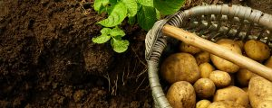 potatoes-header-image