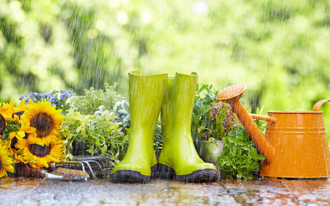 What to Watch for After a Cool, Wet Spring
