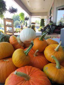 a bunch of pumpkins minter