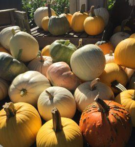 pumpkin pile minter