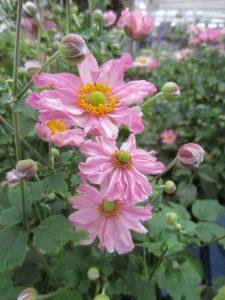 pink flower minter