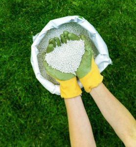 lawn fertilizer in hands