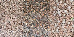 cover crop seeds Minter Country Garden