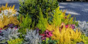 mixed shrub container planter Minter Country Garden