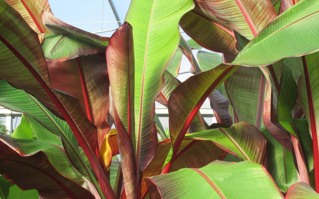 Tender Plants for Fall & Winter