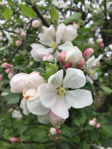 crabapple Minter Country Garden
