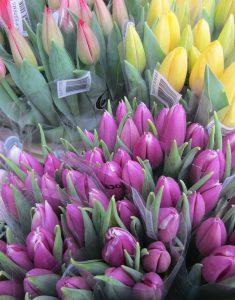 multi coloured tulips in bouquets