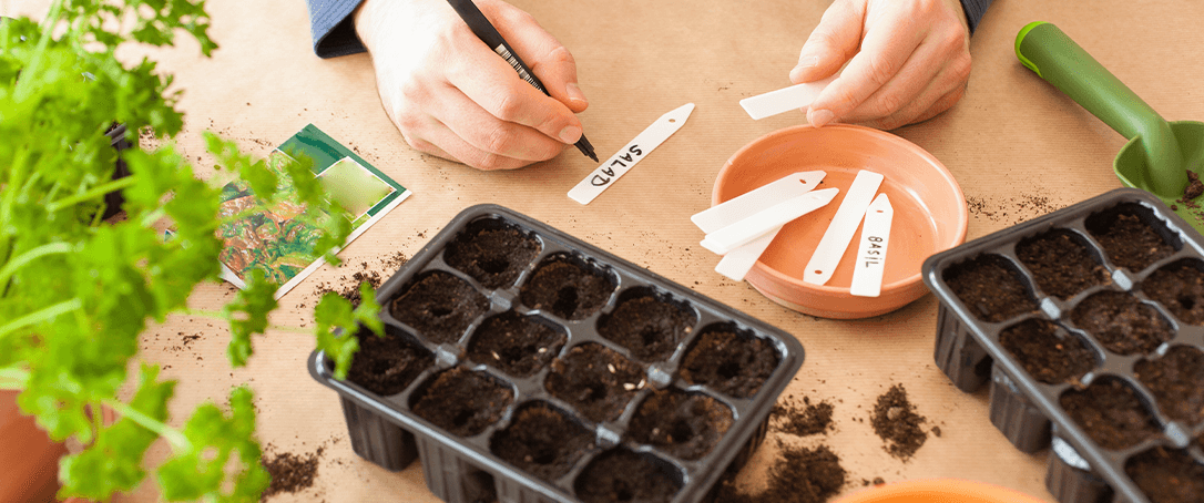 starting seeds in Canada