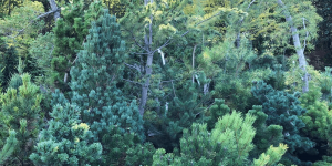assorted evergreen trees