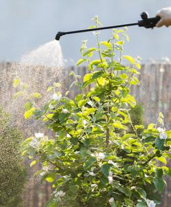 spraying fruit tree Minter Country Garden