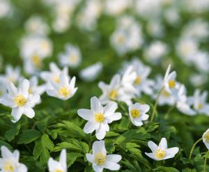 white flowers Minter Country Garden