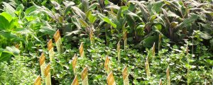 assorted herbs Minter Country Garden